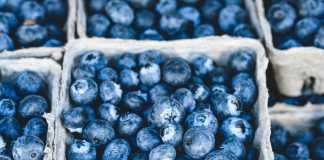 The role of food in preventing memory loss